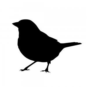 小鳥(147509366)