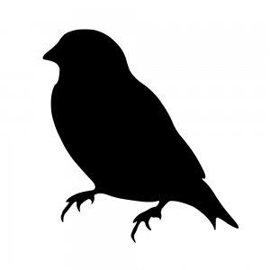 小鳥(147509369)