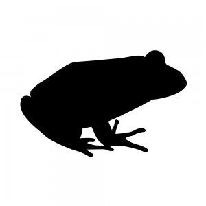 カエル(153659173)