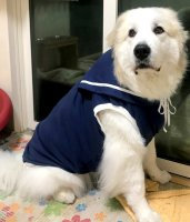 ドッグタンクトップ セーラー 【4Lサイズ(超大型犬)】