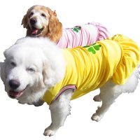 犬服 ドッグフリル COOL 四つ葉のクローバー 【3.5Lサイズ(超大型犬)】メール便送料無料