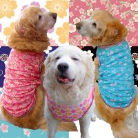 犬服 いぬ服 ドッグタンクトップ 桜プリントタンクトップ さくら【Mサイズ(中型犬)】日本製 メール便送料無料