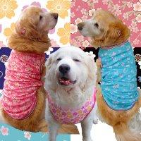 犬服 いぬ服 ドッグタンクトップ 桜プリントタンクトップ さくら【Lサイズ(中型犬)】日本製 メール便送料無料