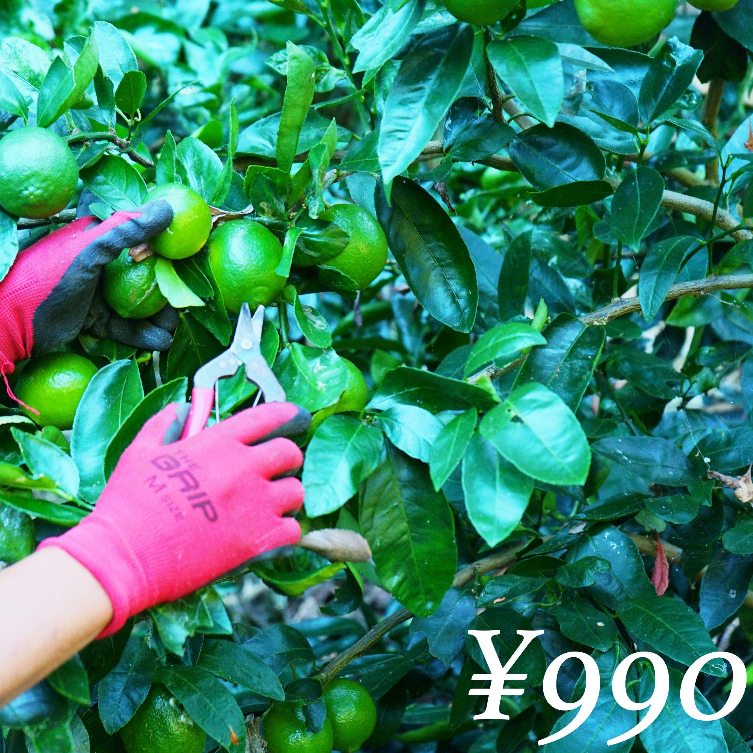 【農薬不使用】 ライム 1kg