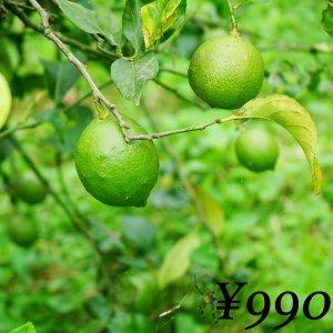 【農薬不使用】 レモン 1�