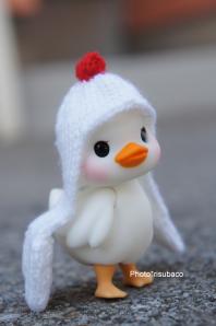 【SALE】chicken cape(赤ちゃんアヒル用)