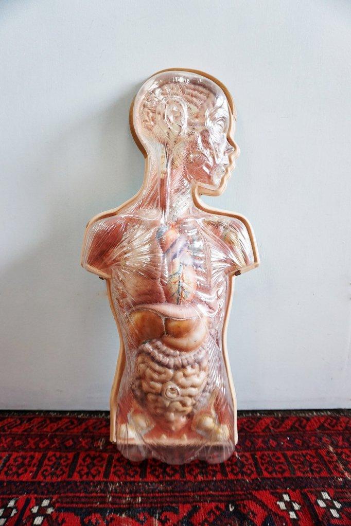 ヴィンテージ メディカルモデルパネル/ 人体模型