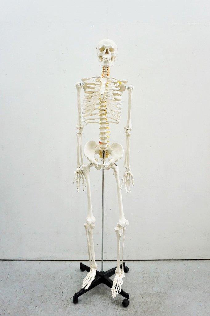 ヴィンテージ アナトミカル スケルトンモデル/人体骨格模型