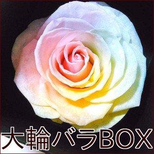 【日頃の感謝を込めて 発売記念*特別価格】 花径9cm大輪バラ ハートのユメ パステルレインボーローズ ボックスギフト プリザーブドフラワー枯れない夢の…