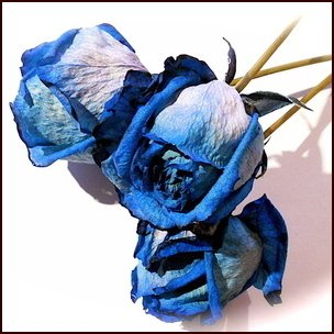 青いバラ ブルーローズ 大輪 ドライフラワーの花束 花材
