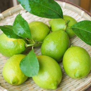 小豆島産グリーンレモン 完全無農薬(3kg)