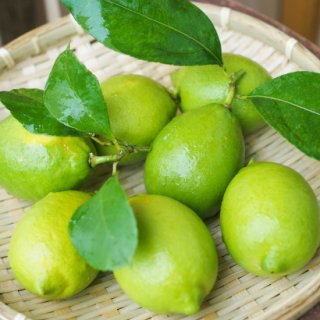 小豆島産グリーンレモン 完全無農薬(5kg)