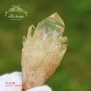 ザンビア産 シトリン原石 (カテドラル・トランスミッター) 水晶