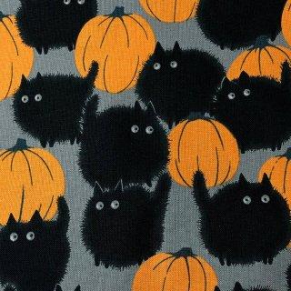 カボチャとまんまる黒猫