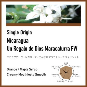 【中煎り】ニカラグア / ウ・レガロ・デ・ディオス マラカトゥーラ ウォッシュト