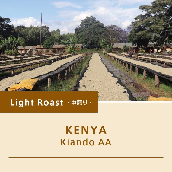 ケニア/キアンドゥAA