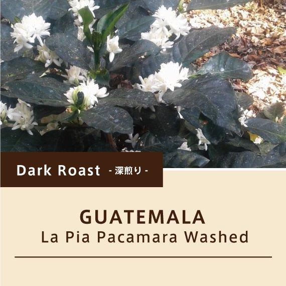 【深煎り】グアテマラ/ラ・ピア パカマラ ウォッシュト2020NW