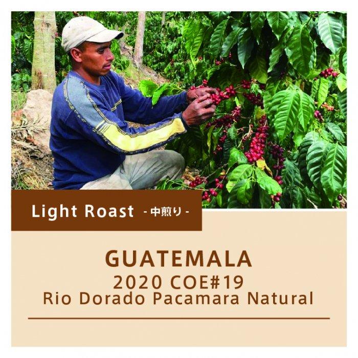 【中煎り】グアテマラ/リオ・ドラド パカマラ ナチュラル 2020COE#19