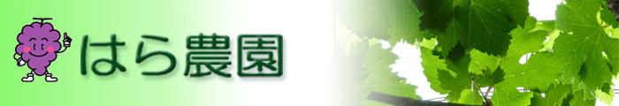 はら農園|広島県神石高原町|ニューピオーネ・シャインマスカットのぶどう狩り 直売 地方発送