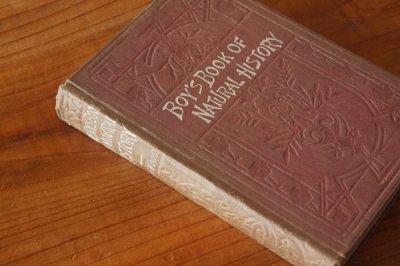 洋古書 Boy's Book of Natural History