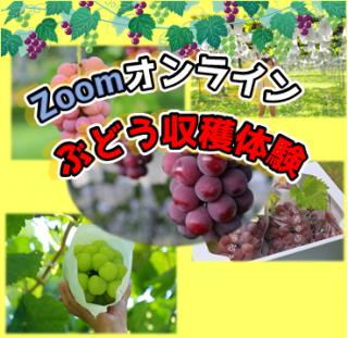 【おすすめ】〜午後13時30分の部〜Zoomオンラインブドウ収穫体験!あなたの選んだぶどうを自宅にお届けします。