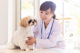 ペットの治癒ヒーリング