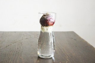 ガラスの花瓶(水栽培クリアカップ)/ドイツ