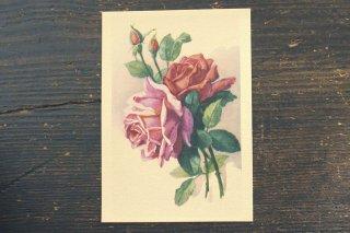 古い葉書(赤とピンクのバラ)