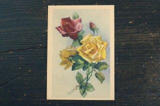 古い葉書(赤と黄のバラ)