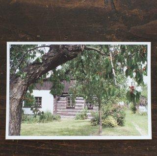 ポストカード さくらんぼの木の家