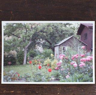 ポストカード バラの庭