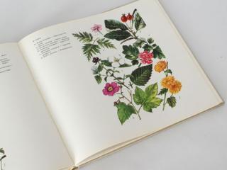 ハンガリーの植物の本「KERTI VIRAGAINK」
