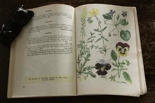植物の本「Kis novenyhatarozo」/ハンガリー