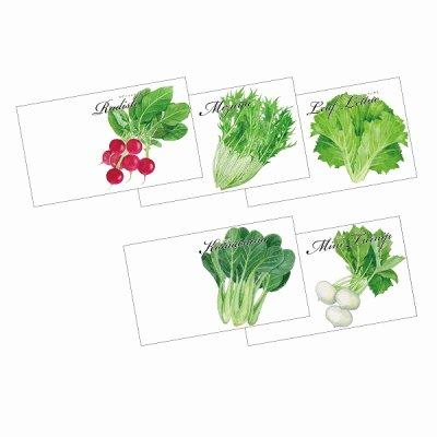 横型イラスト野菜の種子 1個
