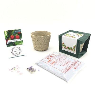 ワイルドストロベリー栽培キット