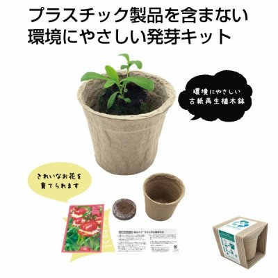 <img class='new_mark_img1' src='https://img.shop-pro.jp/img/new/icons11.gif' style='border:none;display:inline;margin:0px;padding:0px;width:auto;' />【国産】ECOポット 花の種 1個