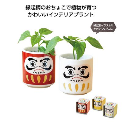 <img class='new_mark_img1' src='https://img.shop-pro.jp/img/new/icons11.gif' style='border:none;display:inline;margin:0px;padding:0px;width:auto;' />【国産】お芽でたおちょこ 達磨 1個
