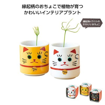<img class='new_mark_img1' src='https://img.shop-pro.jp/img/new/icons11.gif' style='border:none;display:inline;margin:0px;padding:0px;width:auto;' />【国産】お芽でたおちょこ 招き 1個