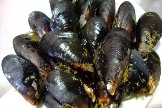 岡山県笠岡諸島産天然 殻付き活ムール貝10kg