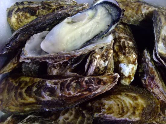 岡山 日生産 殻付き1年牡蠣3kgパック
