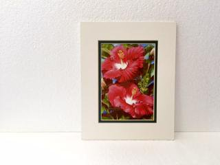 <img class='new_mark_img1' src='//img.shop-pro.jp/img/new/icons21.gif' style='border:none;display:inline;margin:0px;padding:0px;width:auto;' />GARRY PALM watercolors アート Red Hibiscus