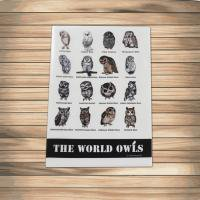 鳥のいるカフェクリアファイル「世界のふくろう」