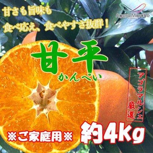 【わけあり・数量限定】アゴラマルシェ契約農家直送 八幡浜産甘平5kg