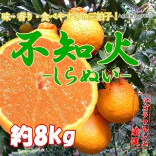 アゴラマルシェ契約農家直送 八幡浜産不知火(しらぬい)8kg