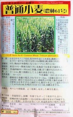 野口のタネ|普通小麦(農林61)|自然農法栽培の小麦種子