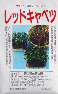 野口のタネ|レッドキャベツ| 赤茎スプラウト