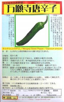 野口のタネ|万願寺唐辛子| 果長15cmと長大の甘唐辛子