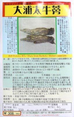 野口のタネ|大浦太牛蒡|形はゴツイが味は最高!