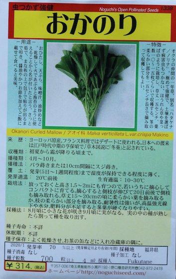 野口のタネ|おかのり|別名ハタケナ 強健な一年草