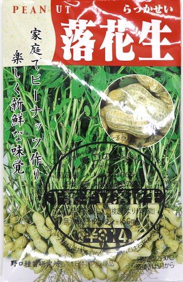 野口のタネ|千葉半立落花生| 大粒種。極上手むき種子